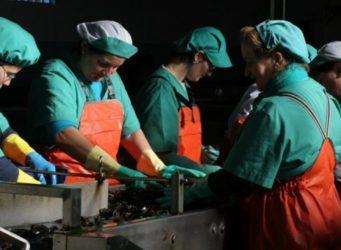 imagen de un grupo de mujeres trabajando en una fábrica