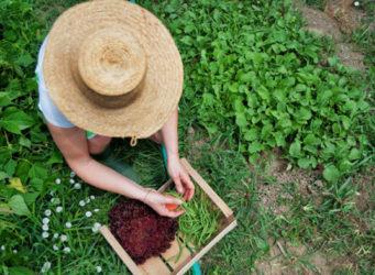 Imagen de una mujer en un campo
