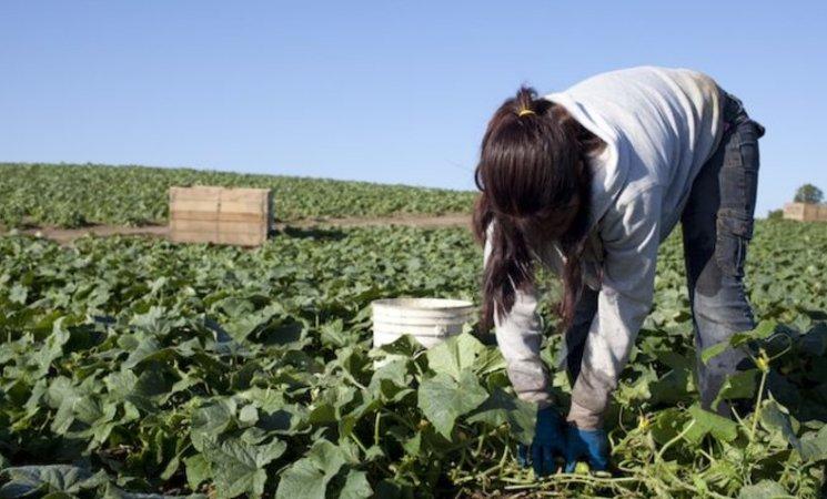 imagen de una agricultora trabajando